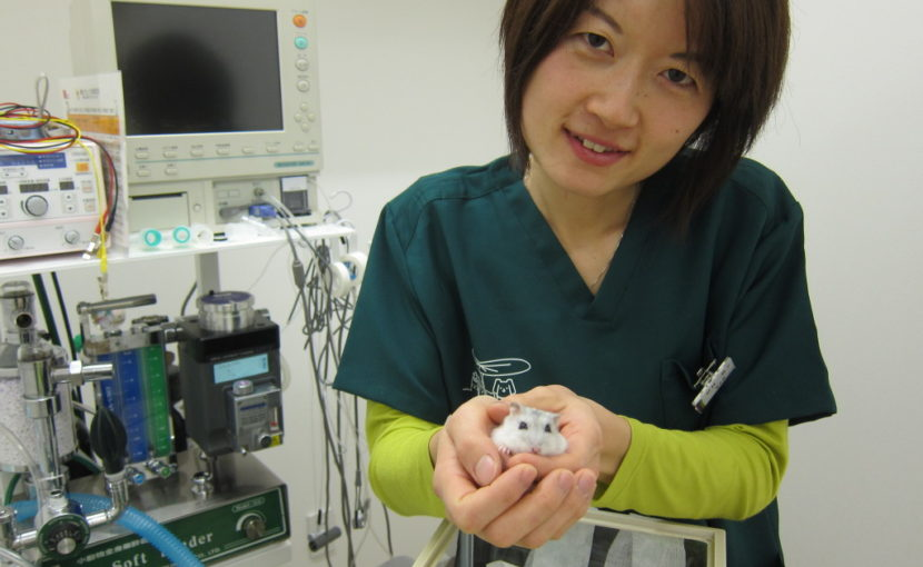 vet with hamster