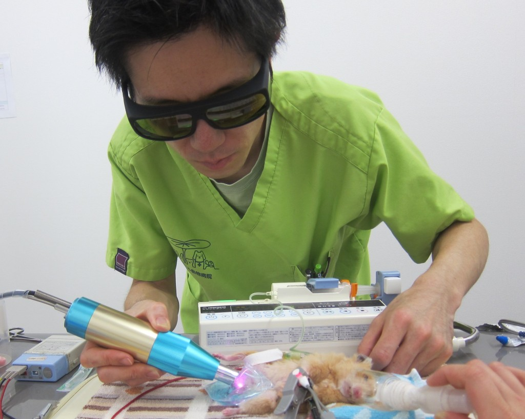 laser therapy for exotic animals